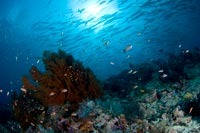 Diving Borneo with Seaventures
