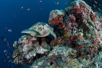 Diving Sabah With Seaventures