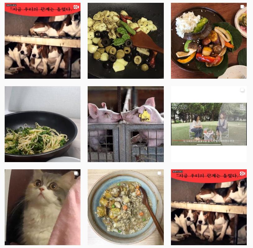 온라인 동물권행진 인스타그램 포스팅 일부